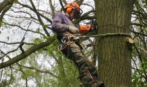 boomverzorging door damink tuin en landschap